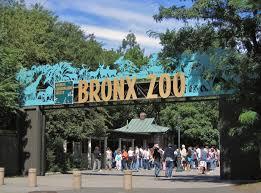 Bronx Zoo Tiger Coronaviurs Positive